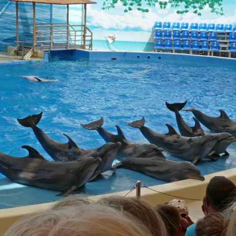 sea-animals-in-anapsky-dolphinarium