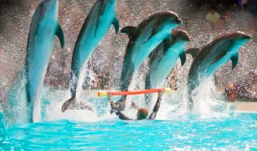 dubai-dolphinarium-tour-packages (2)