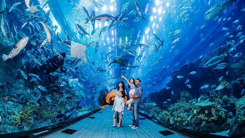 Visit Dubai Mall Aquarium And Underwater Zoo